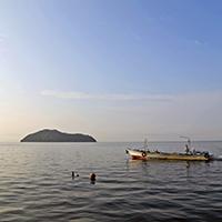 琵琶湖には、約80種の魚類が生息し、うち16種が琵琶湖のみの固有種