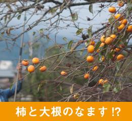 柿と大根のなます!?