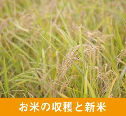 お米の収穫と新米