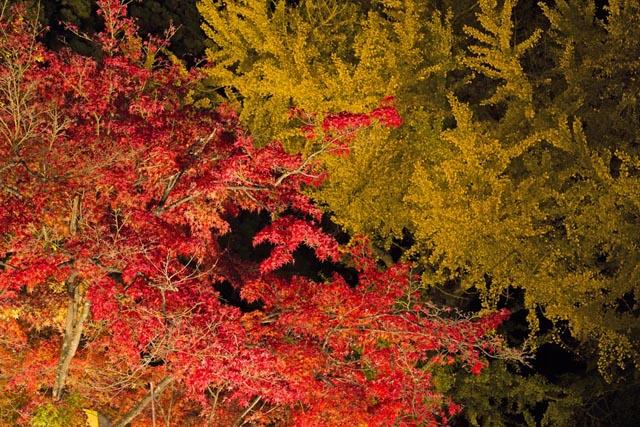 幻想的な意冨布良神社の紅葉