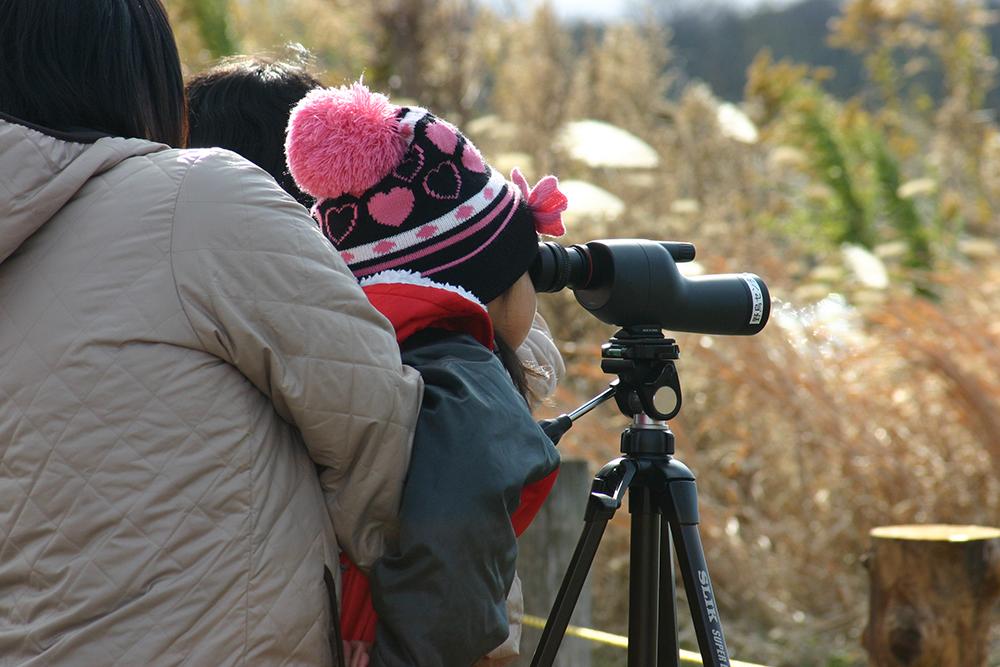 野鳥観察4