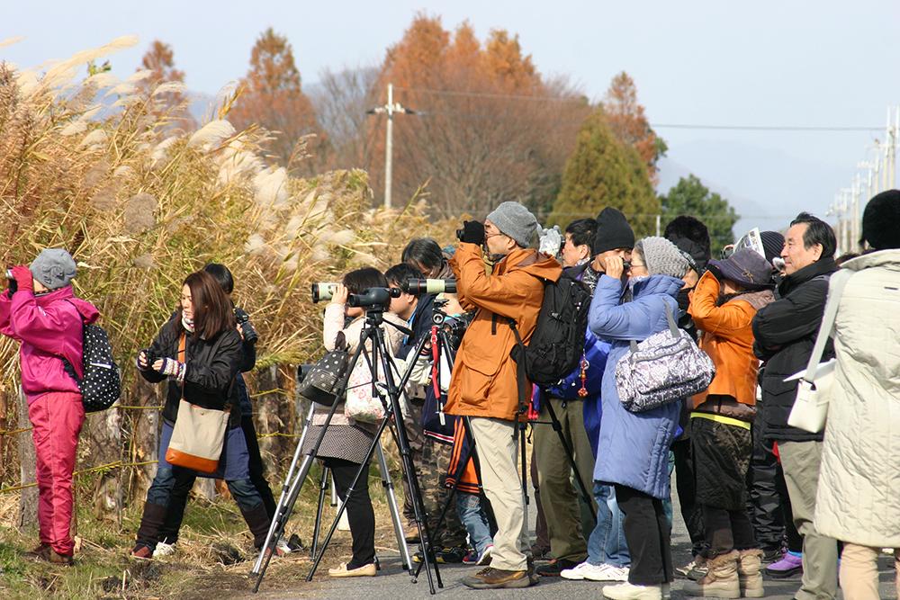 野鳥観察3