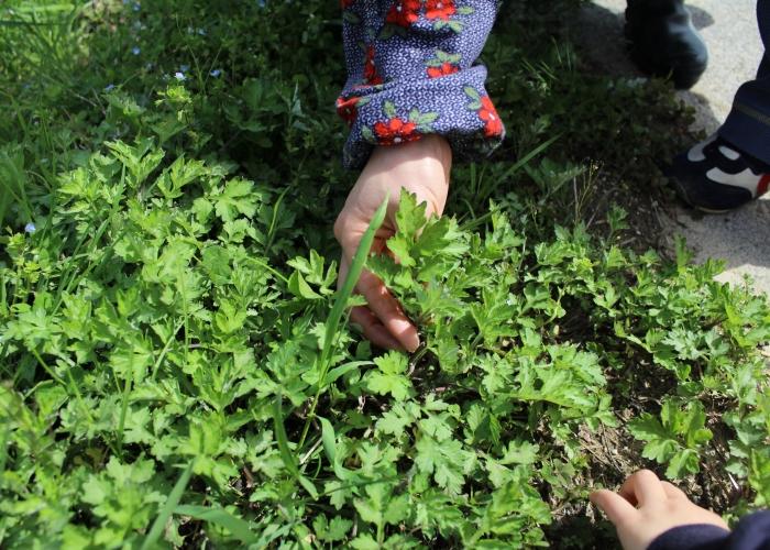 春の山里で山菜を頂く