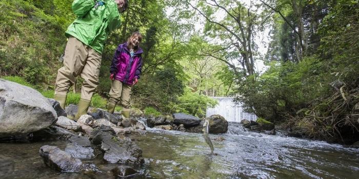 新緑の自然のなか、爽快な気分で渓流釣りに挑戦!