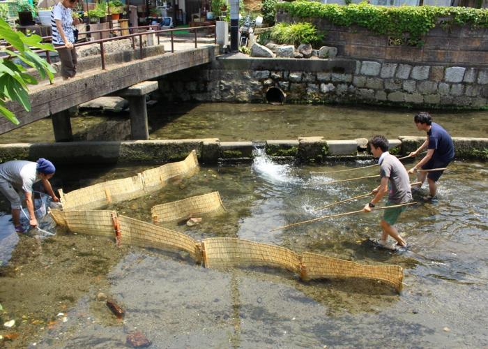 米川で魚捕り