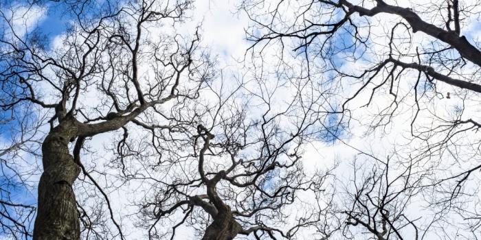 森のメープルで強まる人と森の結びつき
