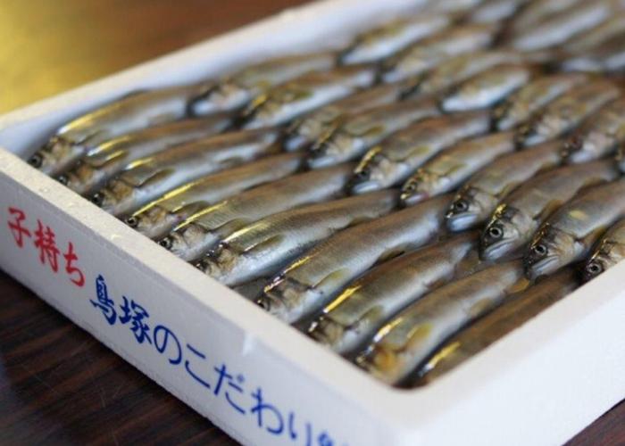 「琵琶湖の食文化守りたい」 鮎養殖の「鳥塚」